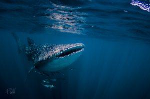 RAW Envision at Southport Sharks