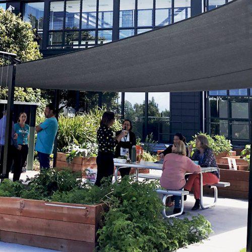 Gold Coast University Hospital Community Garden